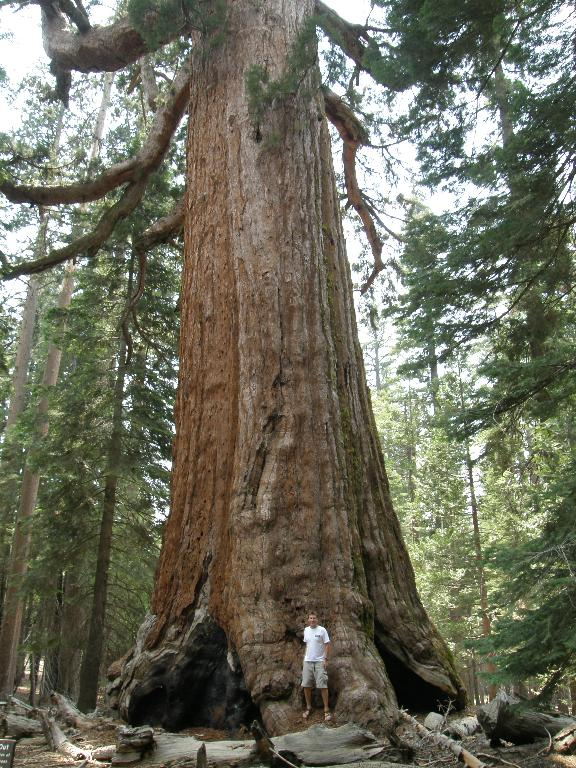 chris-and-the-biggest-tree